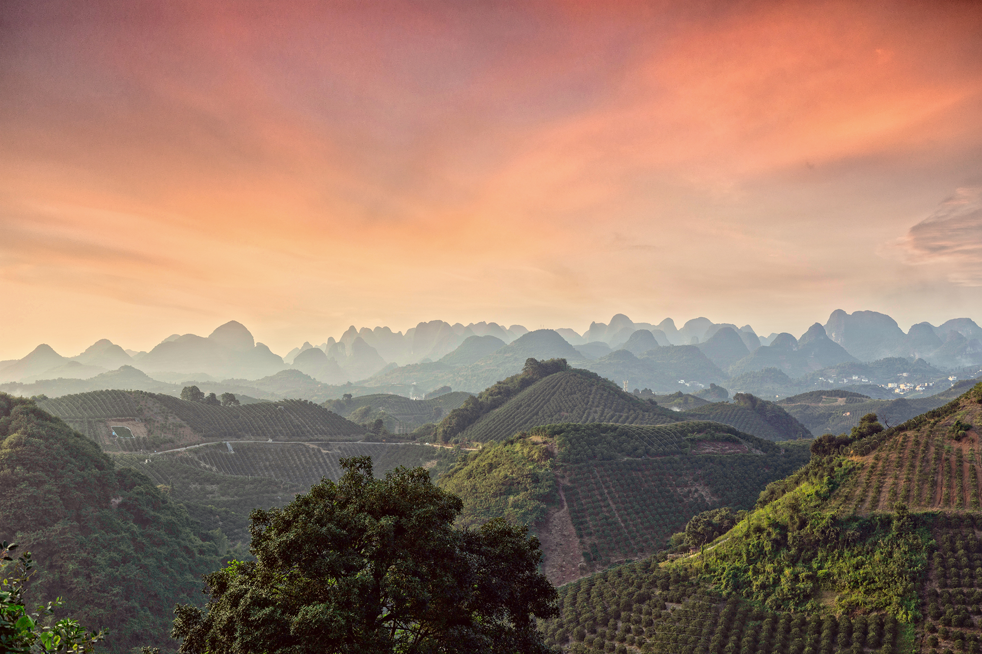 5 reasons why you need to visit a tea plantation when in China!
